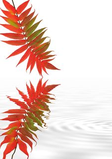 Free Rowan Leaf Ripples Stock Photo - 4801400