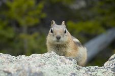Free Ground Squirrel Stock Photography - 4801712