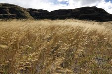 Free Grassy Field Stock Images - 4802314