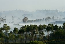 Free Fog In The Forest Stock Photos - 4802343