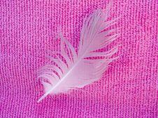 Free White Feather Stock Photos - 4802353