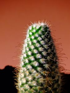 Free Cactus Stock Photography - 4802482