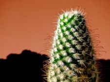 Free Cactus Stock Photo - 4802530