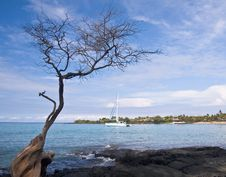 Free Hawaiian Bay With Tree And Boat Royalty Free Stock Photos - 4803178