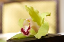 Free Sun Drenched Beautiful Romantic Orchid Stock Image - 4803541