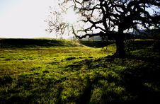 Free Oak Tree Royalty Free Stock Photo - 4804095