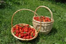 Free Strawberry Baskets Stock Image - 4804421