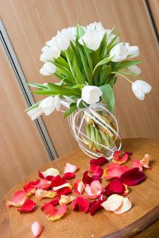 Free Various Tulips Royalty Free Stock Images - 4804659
