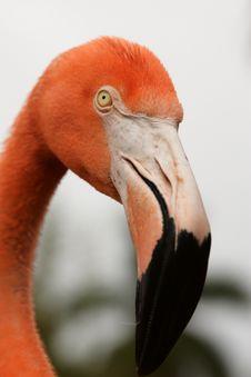 Free Head Of Flamingo Stock Images - 4804984