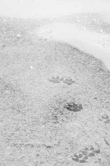 Free Footprints Stock Photo - 4805320