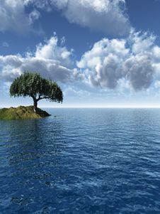 Free Tree Sea Stock Image - 4805451