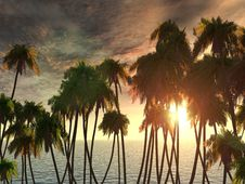 Free Palms Tops Royalty Free Stock Photo - 4805455