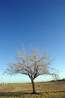 Free Dry Tree Stock Images - 4806584