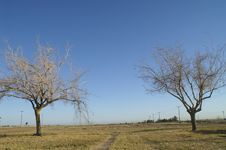 Free Dry Tree Royalty Free Stock Images - 4806589