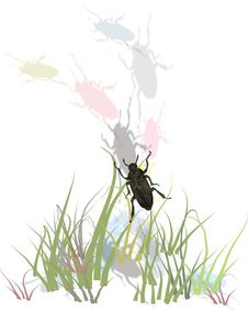 Free Bugs In Grass Royalty Free Stock Photography - 4807137