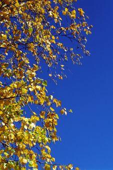 Free Autumn Leaves Royalty Free Stock Photo - 4807745