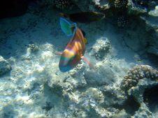 Free Fish Big Royalty Free Stock Images - 4807769