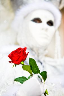 Free Red Rose And White Costume Royalty Free Stock Images - 4808239