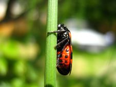 Free Small Bug Stock Photography - 4808422