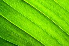 Free Green Leaf Texture Royalty Free Stock Photography - 4809427