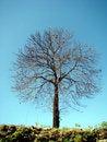Free Lonely Tree Stock Image - 4810761