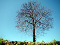 Free Isolated Tree Against Blue Sky Royalty Free Stock Photo - 4810885