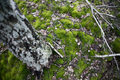 Free Moss Stock Image - 4811931
