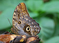 Free Butterfly Feeding Stock Photography - 4813962