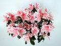 Free Nice Window Flower Royalty Free Stock Image - 4816476