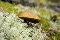 Free Wild Mushroom Stock Photo - 4818500