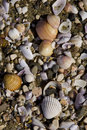 Free Beach Shells Stock Photos - 4818853