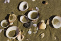 Free Beach Shells - Close Horizontal Royalty Free Stock Photos - 4818858
