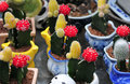 Free Cactus In Basket Bowl Stock Photography - 4819942