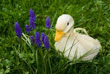 Free White Duck Purple Flowers Royalty Free Stock Images - 4810609