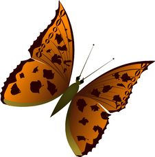 Free Butterfly 1 Stock Images - 4811154