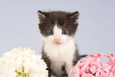 Free Black And White Kitten And Two Flowers Stock Photos - 4811323