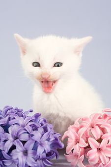 Free White Kitten And Two Flowers Stock Photography - 4811352