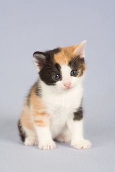 Free Spotted Kitten Stock Photo - 4811760