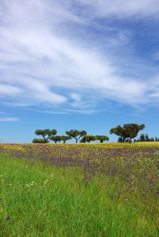 Free Colored Field Of Alentejo. Stock Image - 4811981