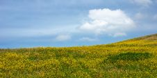 Free Yellow Hillside Royalty Free Stock Photography - 4813057