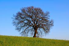 Free The Big Oak Stock Images - 4813514