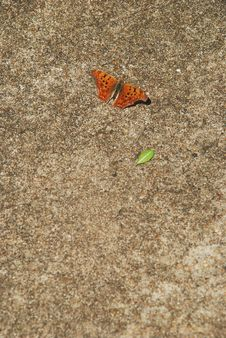 Free Butterfly On Pavement Stock Images - 4813724
