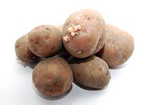 Free Potatoes Stock Photo - 4816670