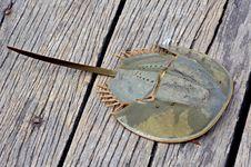Free Malaysia, Langkawi: Strange Crustacean Stock Image - 4816711