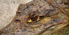 Free Crocodile Eye Stock Photo - 4816750