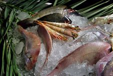 Free Seafood  Ice Royalty Free Stock Photo - 4817795