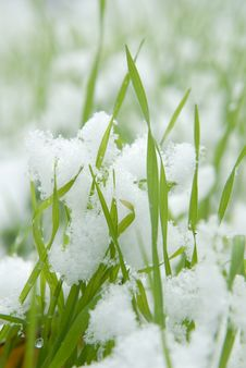 Free Close-up Of Frosted Grass Stock Image - 4818091