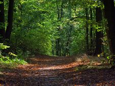 Free Forest Path Stock Photos - 4818373