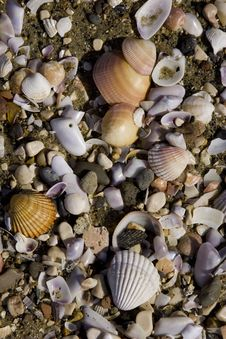 Free Beach Shells Stock Photos - 4818853