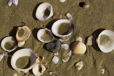 Free Beach Shells - Close Horizontal Royalty Free Stock Photos - 4818858